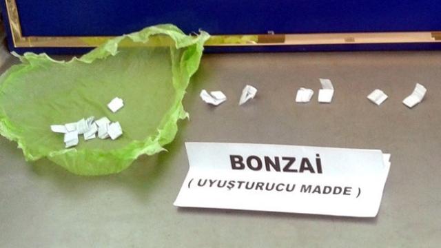 bonzai